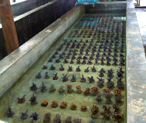 Corals prepared for shipping