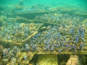 Coral platforms
